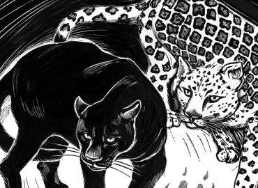 black jaguar and white jaguar drawn in scratchboard