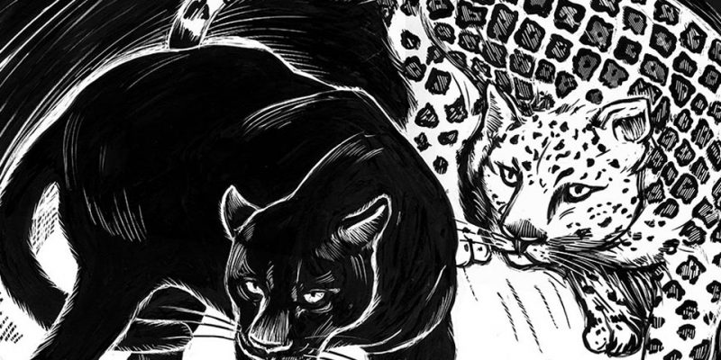 black jaguar and white jaguar drawn in scratchboard